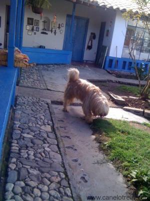 Perro agresivo modifica conducta