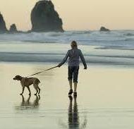 Viaja con tu mascota a muchos lugares