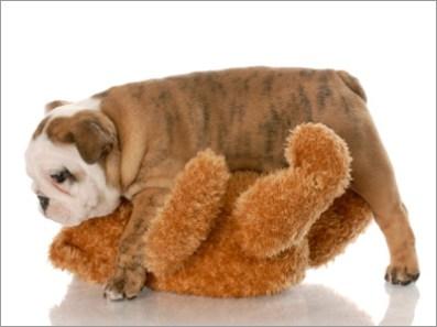 Algunos perros hacen humping con los objetos de la casa