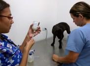 Antibióticos para evitar la infección de la perra