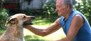 Estudios han comprobado que dueño y perro experimentan un proceso de conexión similar al de madre e hijo cuando se miran