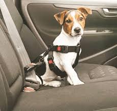 Otro consejo para evitar que el canino se maree es sentarlo lo más cerca posible del conductor. Foto: animaleshoy.net