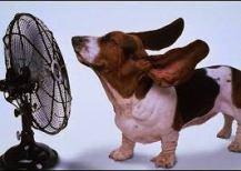 No dejes a tu perro expuesto al calor, déjalo donde reciba sombra y con ventilación. Foto: nosolomascotas.com