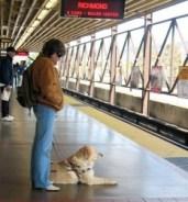 Prohibir el ingreso de perros lazarillos a lugares públicos, sistemas de transporte masivo y edificios públicos o privados también será sancionado. Foto: Luz Verde