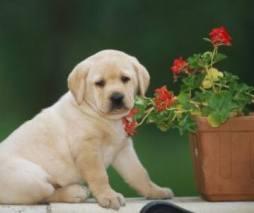 Mantén en un lugar seguro y que el cachorro no pueda alcanzar los siguientes elementos: joyería, monedas, plantas de interiores,etc Foto: perros.com