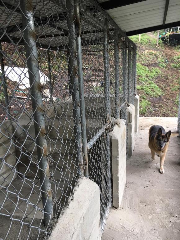 Caniles guardería para perros.