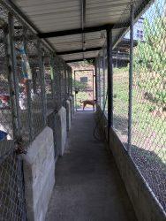 Imagen de la guardería campestre y hotel canino de DOCTOR PULGAS.