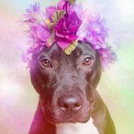 El proyecto llamado intenta desmitificar las creencias que hay alrededor de estos perros foto: Sophie Gamand
