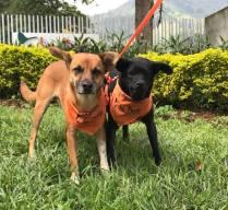 Tinto y Betty, los nuevos habitantes de la Alcaldía de Medellín.