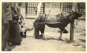 Farrier.Chinese