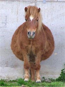 Fat-Horse.jpg