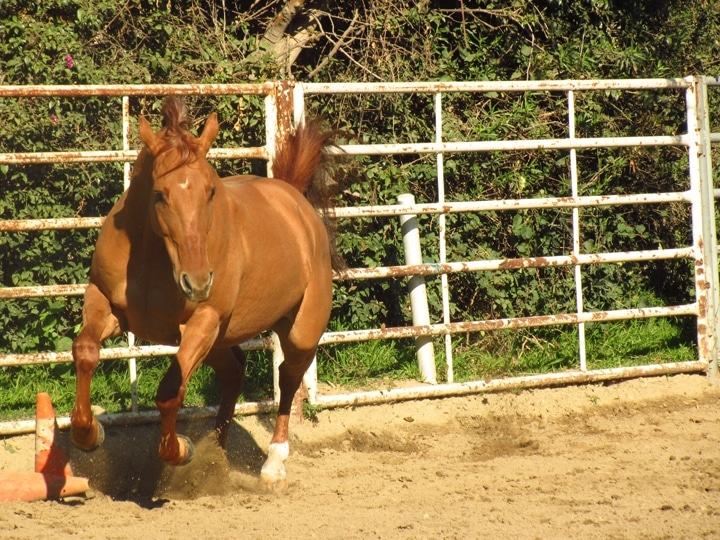 Healthy as a Horse?
