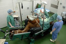 How Do You Know Your Horse Needs Colic Sugery?