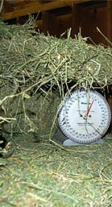 weighing-hay2