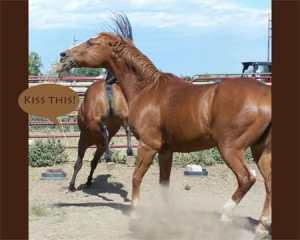 Horse.Communication
