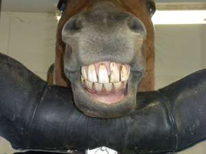 Horse-Smiling