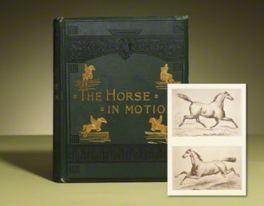 Horseinmotion
