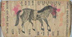 Pferd_ch[1].Buch002