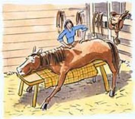 horse_chiro_cartoon-266x234