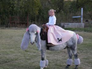 Horse as poodle