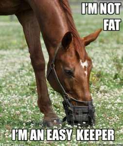 easy-keeper