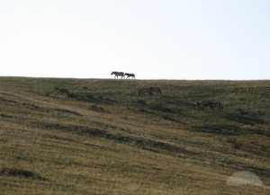 Isolated horses