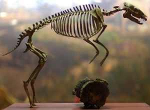 Eohippus, in prehistoric jumper training