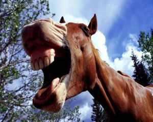 horse_teeth1