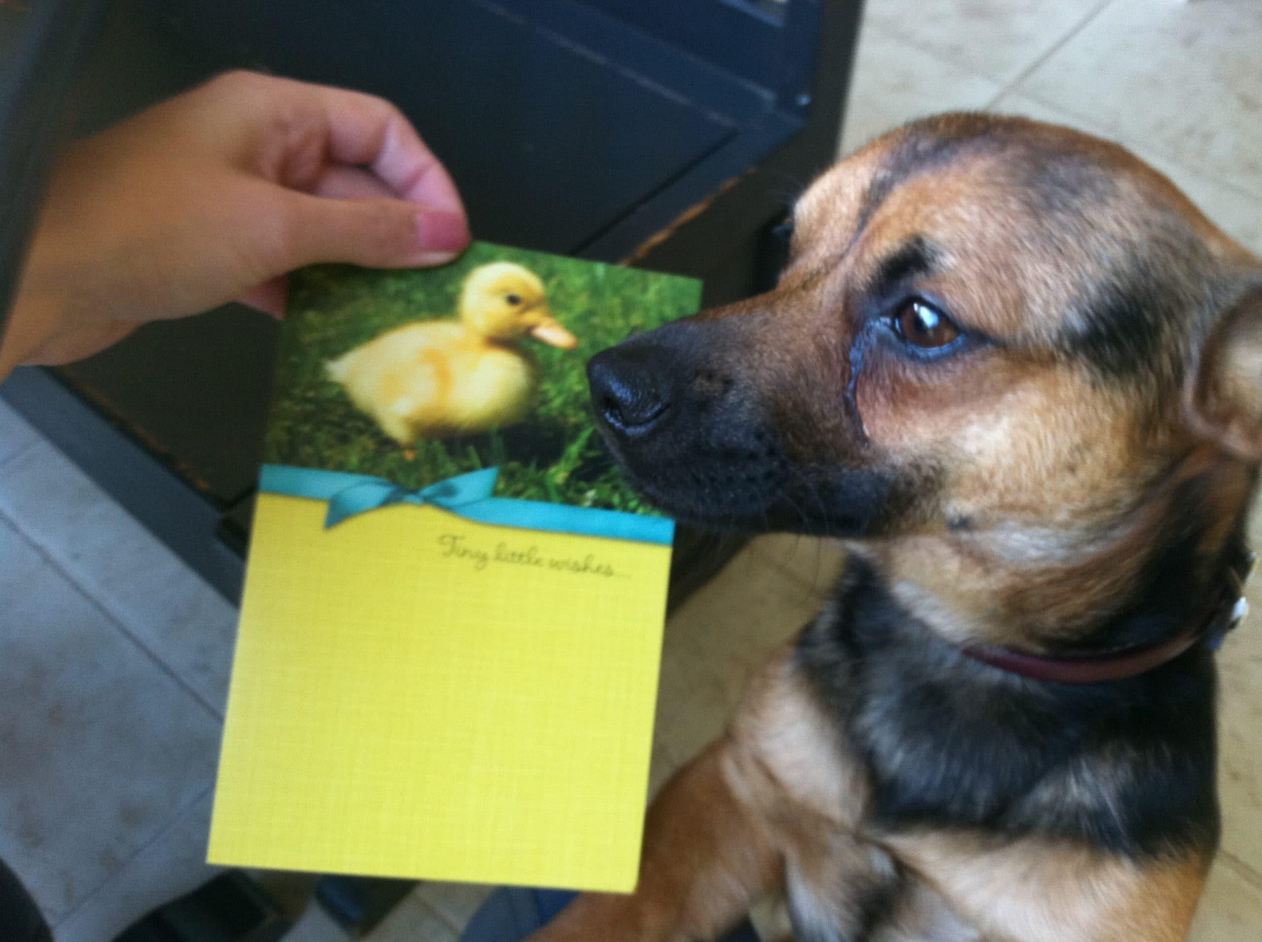 Duck.Easter.jpg
