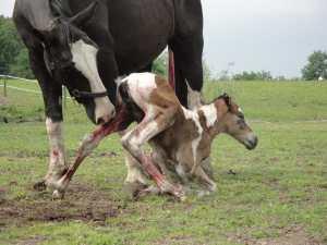 NewFoal
