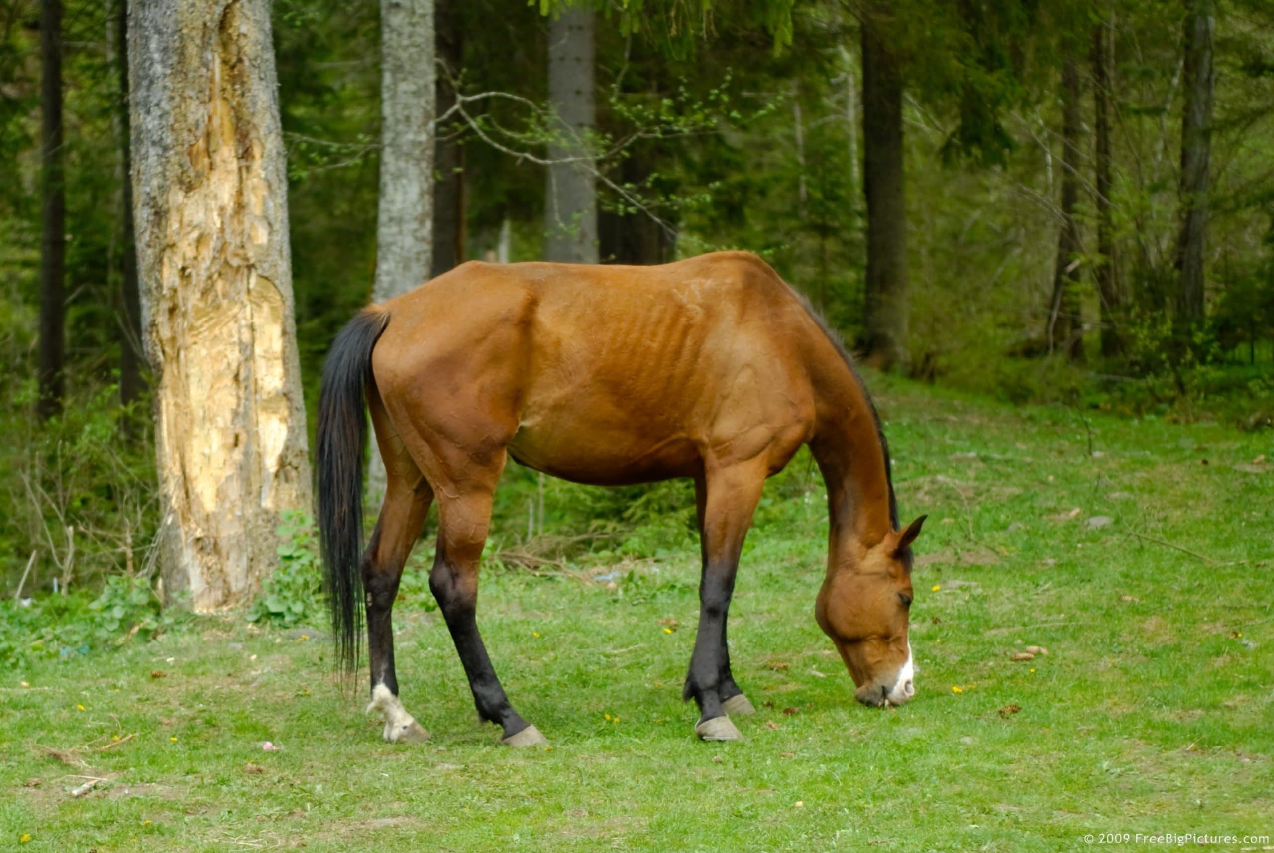 horse-grazing.jpg
