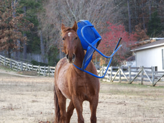 Five Simple Things You Should Do To Help Keep Your Horse Healthy