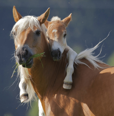 Mare-and-foal.Cute-pic.png
