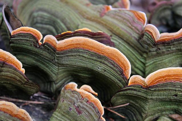 tree-fungus-981596_640