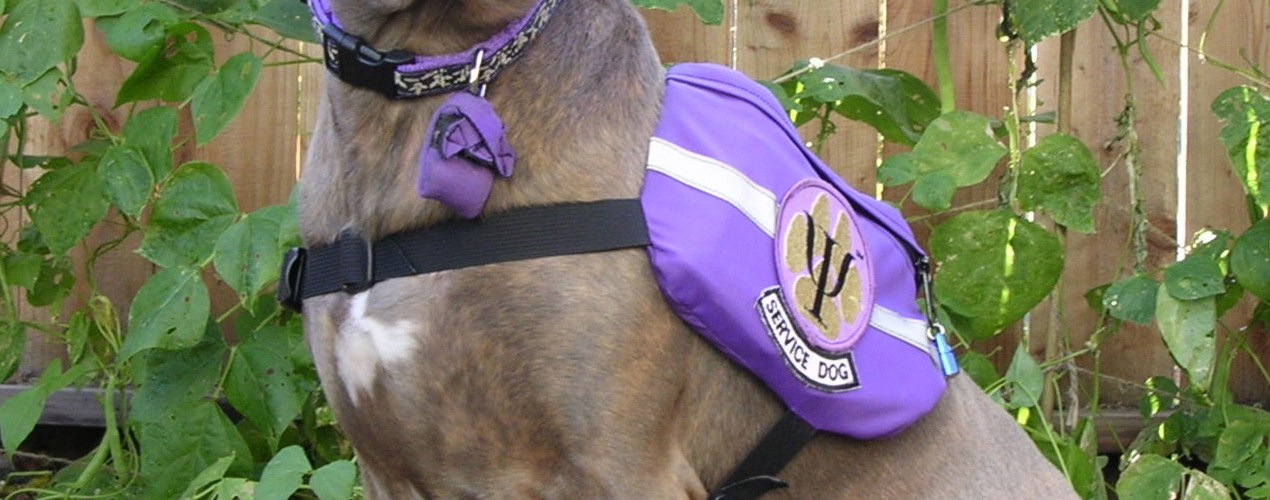 Weimaraner and pit bull mix Sabrina, in a purple vest in front of bean plants