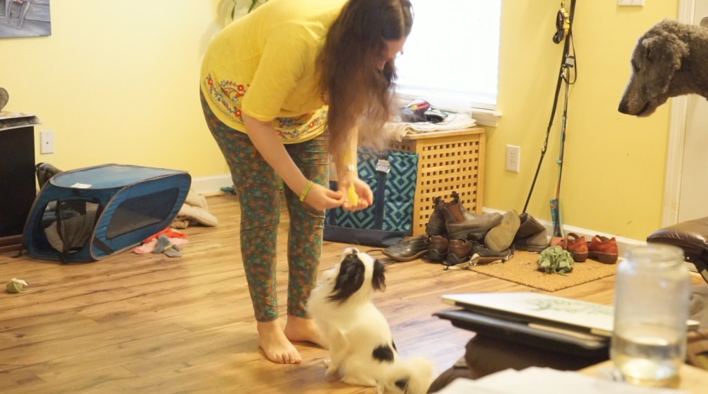 Veronica in a bright yellow shirt with green leggings giving Hestia a treat from front position. Ollie's head can be seen on the couch in a stay.
