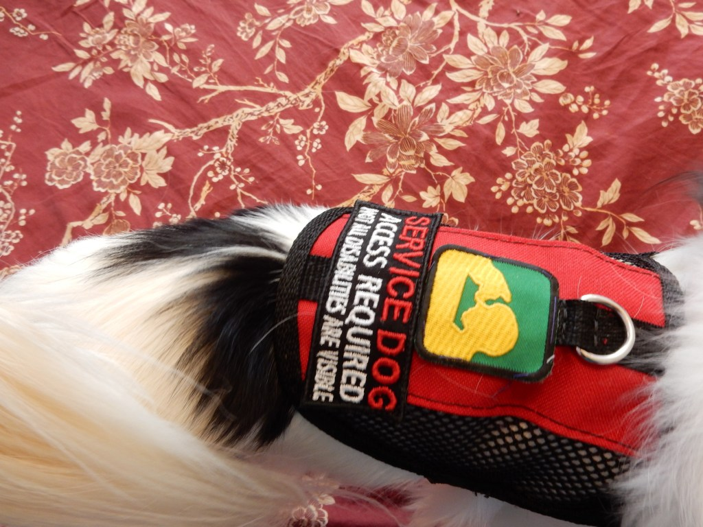 """Close up of the new patch on the red vest.  It says """"SERVICE DOG, ACCESS REQUIRED, NOT ALL DISABILITIES ARE VISIBLE"""""""