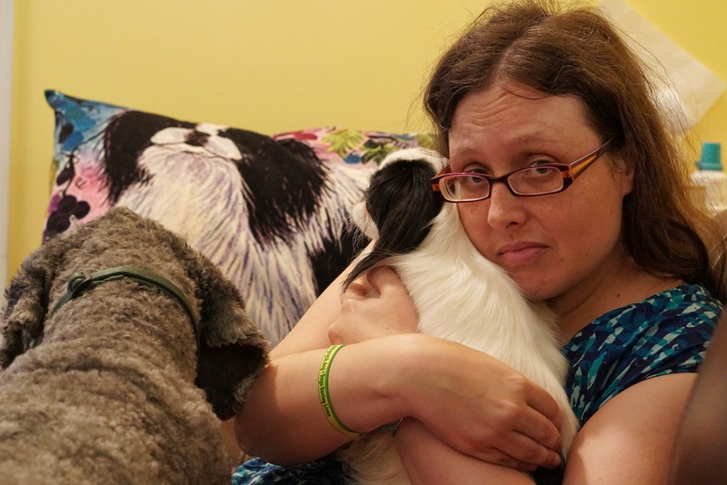 Color picture including Ollie's back as he licks Veronica's leg.  There is a Japanese Chin pillow behind everyone.