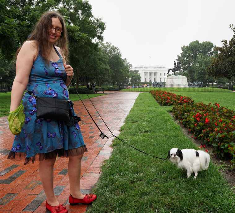 Veronica wearing her blue butterfly dress with black lace trim. Hestia, a small black and white dog pooping in front of the White House!