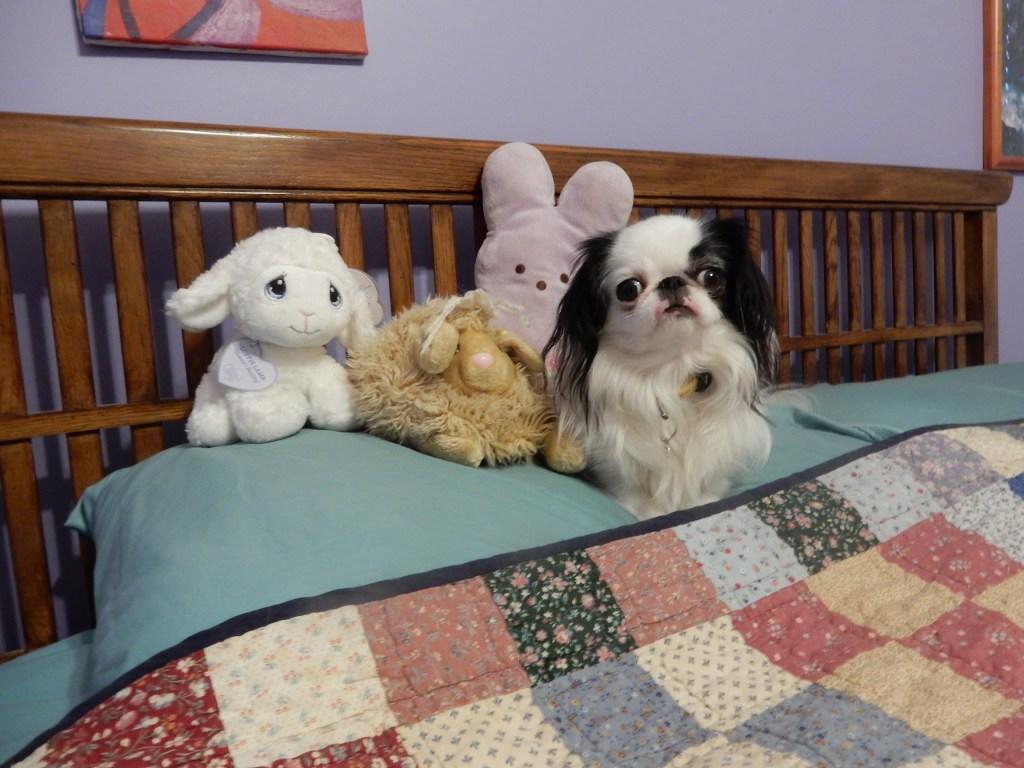Hestia with the Bun-Lamb fam.