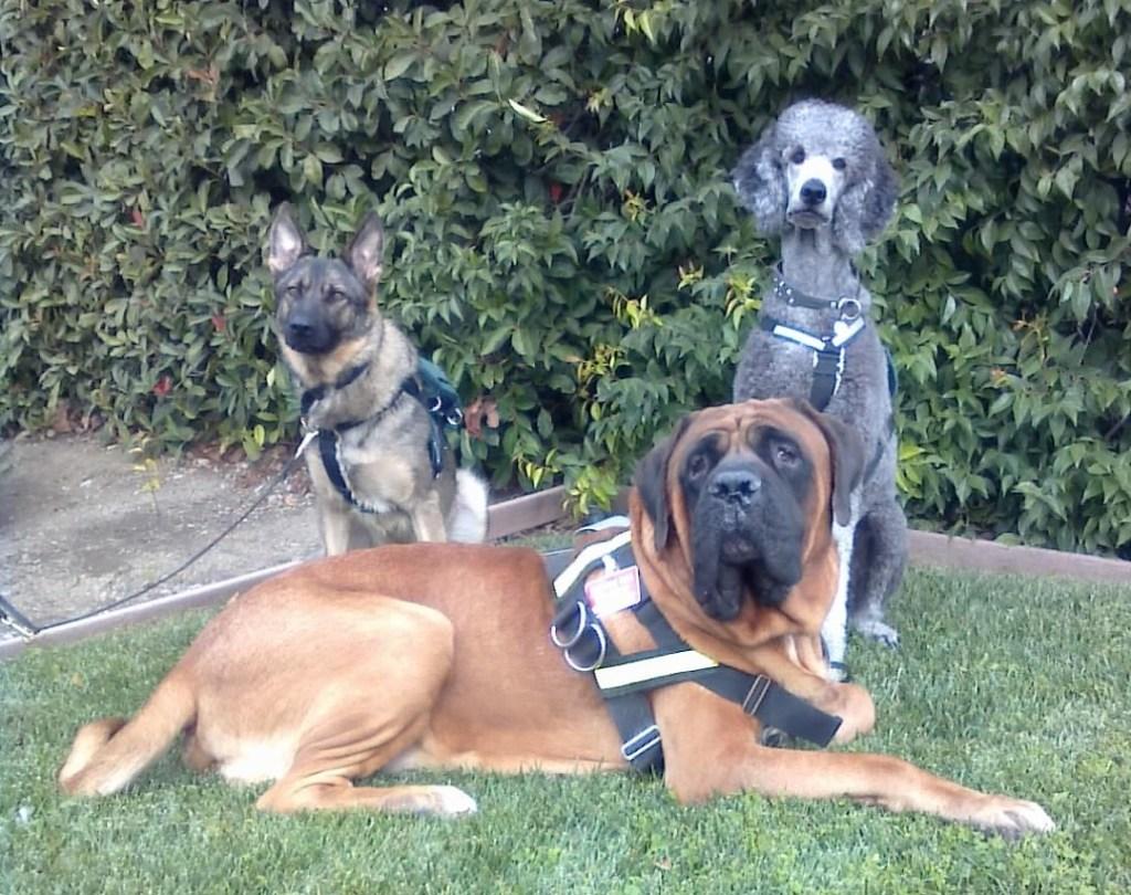 The original three musketeers-- Ollie, Iris, and Zeus.
