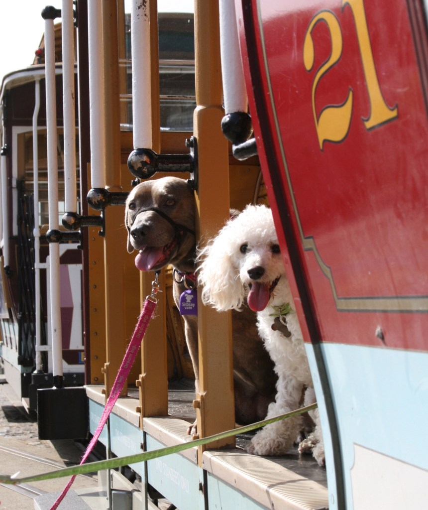Sabrina and her friend Snowy (mini poodle) ride the cable car in San Francisco.