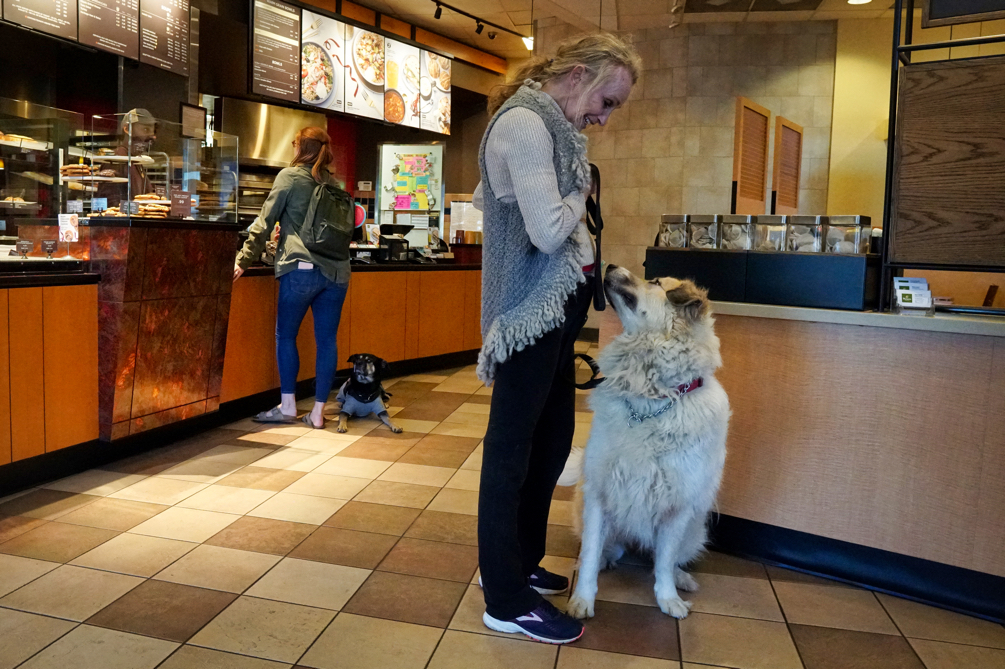 Cynthia with Kilo orders at Panera while Phyllis and Avalanche wait in line.