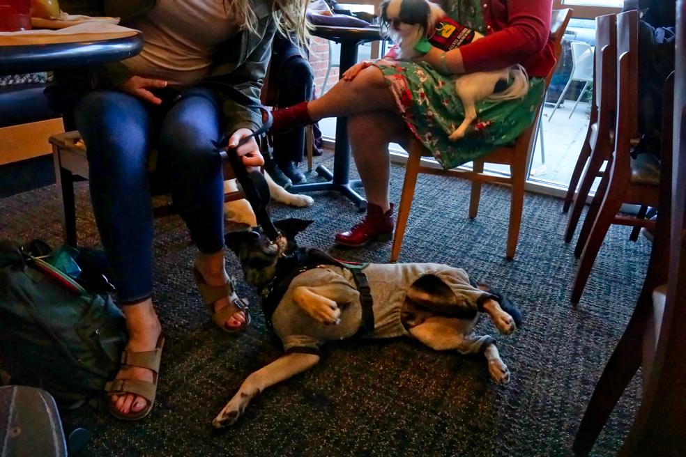 Kilo gets comfortable, rolling over on his side with his legs in the air!  Hestia looks interested from her position in Veronica's lap.