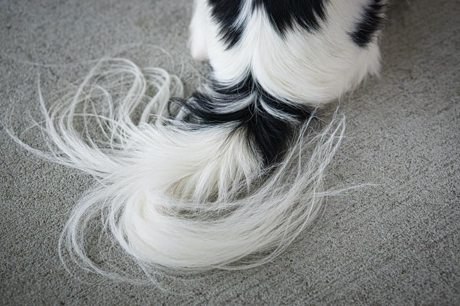 Hestia's long flowy tail.