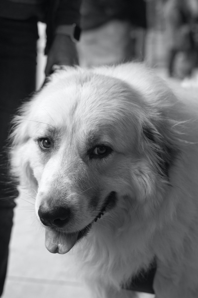 A black and white photo of Avalanche looking into the camera.