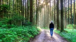 Boswandeling tegen depressie