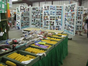 4H and FFA Exhibits
