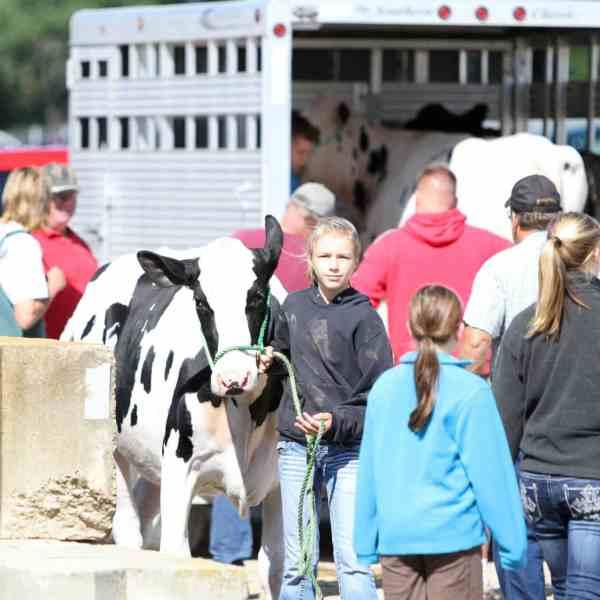 2019 Junior Fair Animal and Veterinary Science Judging Results