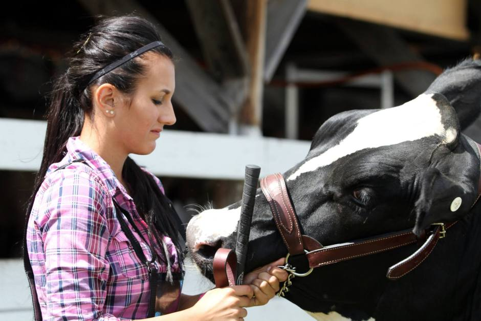 Dairy Cattle Show